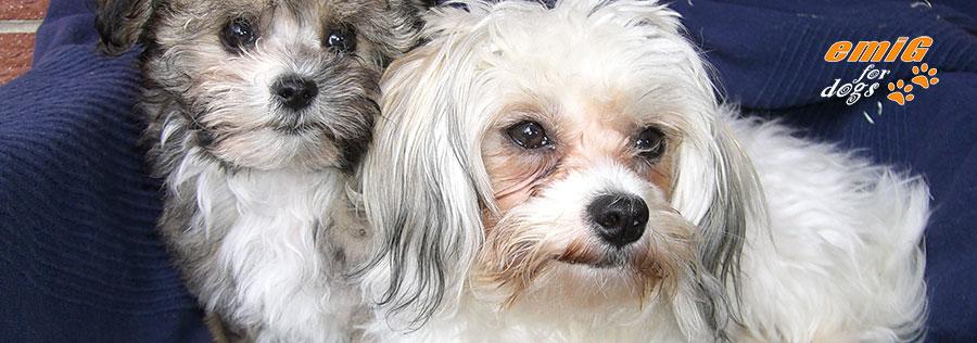 Hundehalsband 2,0cm