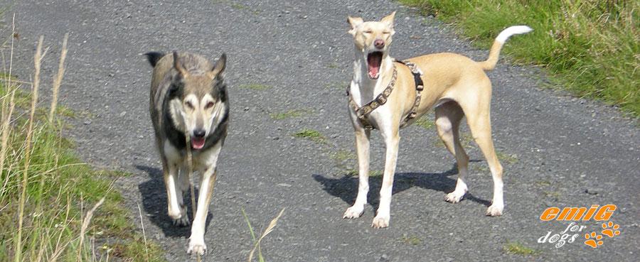 Hundehalsband Zugstop