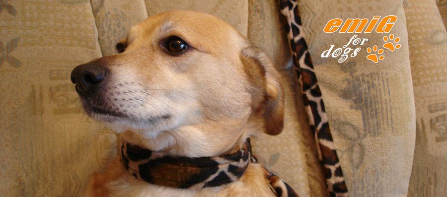 Fell Zugstop Hundehalsband
